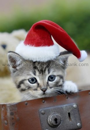 Cute kitten images for licensing
