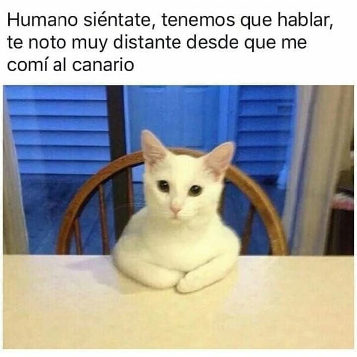 Humor Chistes Chiste Risas Memes Risasinmas Humor De Perros Memes Graciosos De Animales Chistes Divertidos