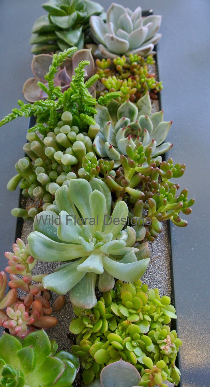 Succulent wedding flowers, planted table centrepieces.
