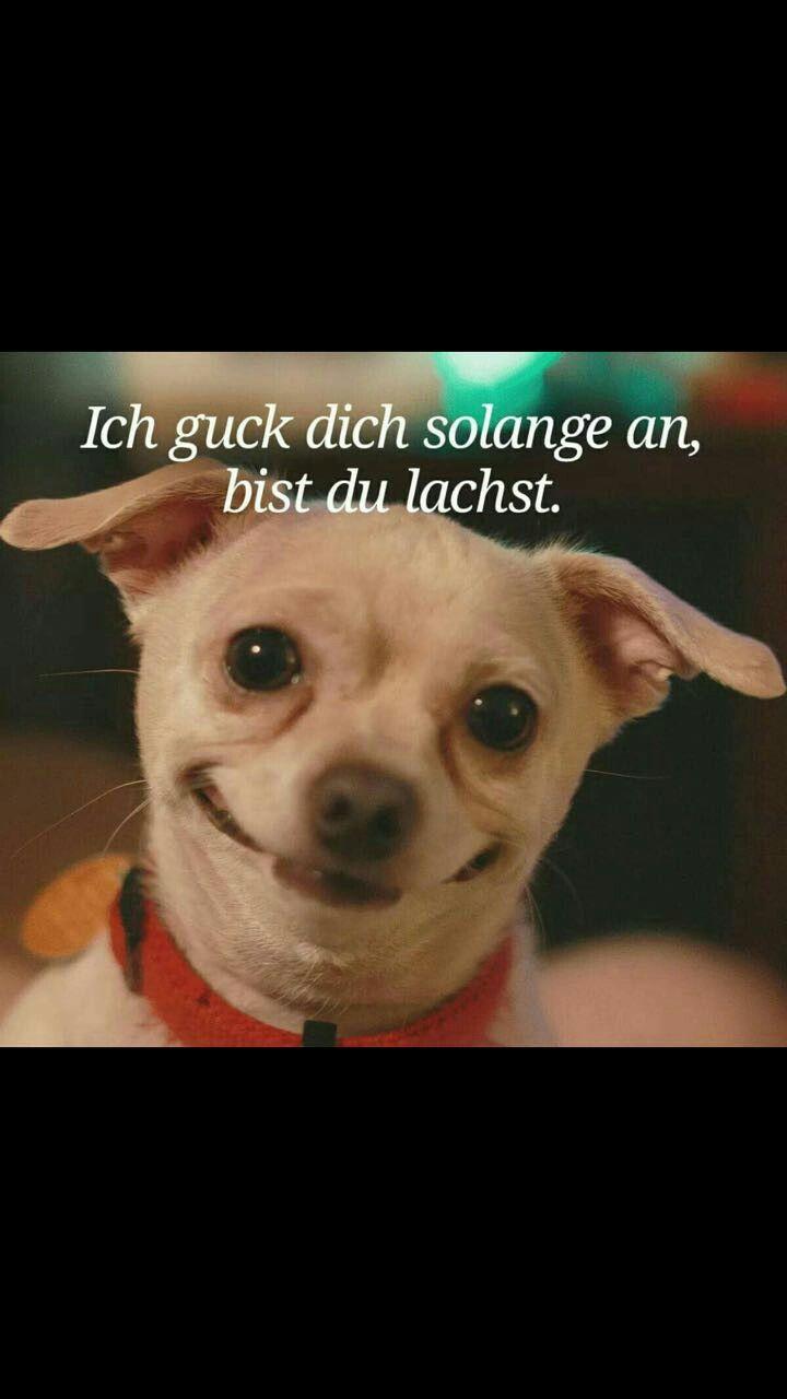 Idee von Veronika Fuchs auf Witzig   Lustig humor, Lustige ...
