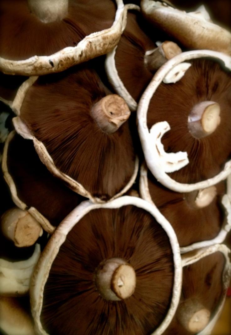Field Mushrooms @ the Mushroom stall!