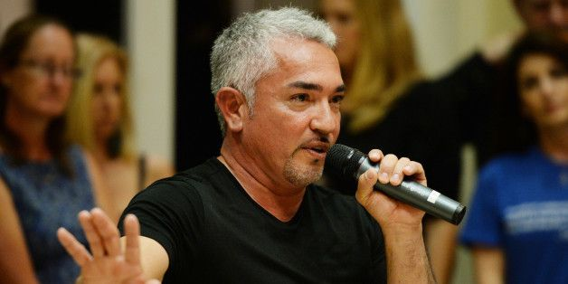 It's no secret that Cesar Millan is under investigation for animal cruelty relating to a recent episode of his show, Cesar 911 which featured a ...
