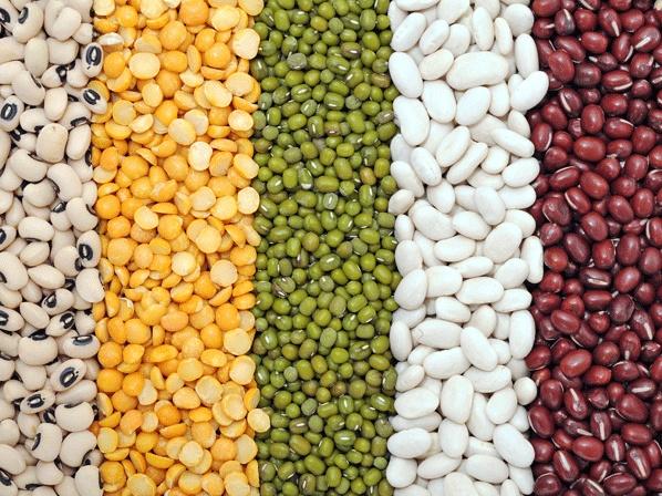 Los frijoles, como todo alimento de bajo índice glucémico, hacen mas lenta la actividad de la glucosa en la sangre, y por ende el cuerpo tarda más tiempo en asimilarlo y proporciona más saciedad. La Universidad de Sydney informa que el índice glucémico de este alimento es de 37, cuando la glucosa tiene un IG de 100.