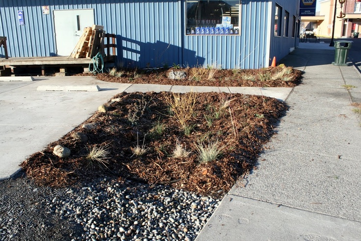 Rain garden at our local NAPA auto parts store infiltrate 100% of the roof and all the parking area.