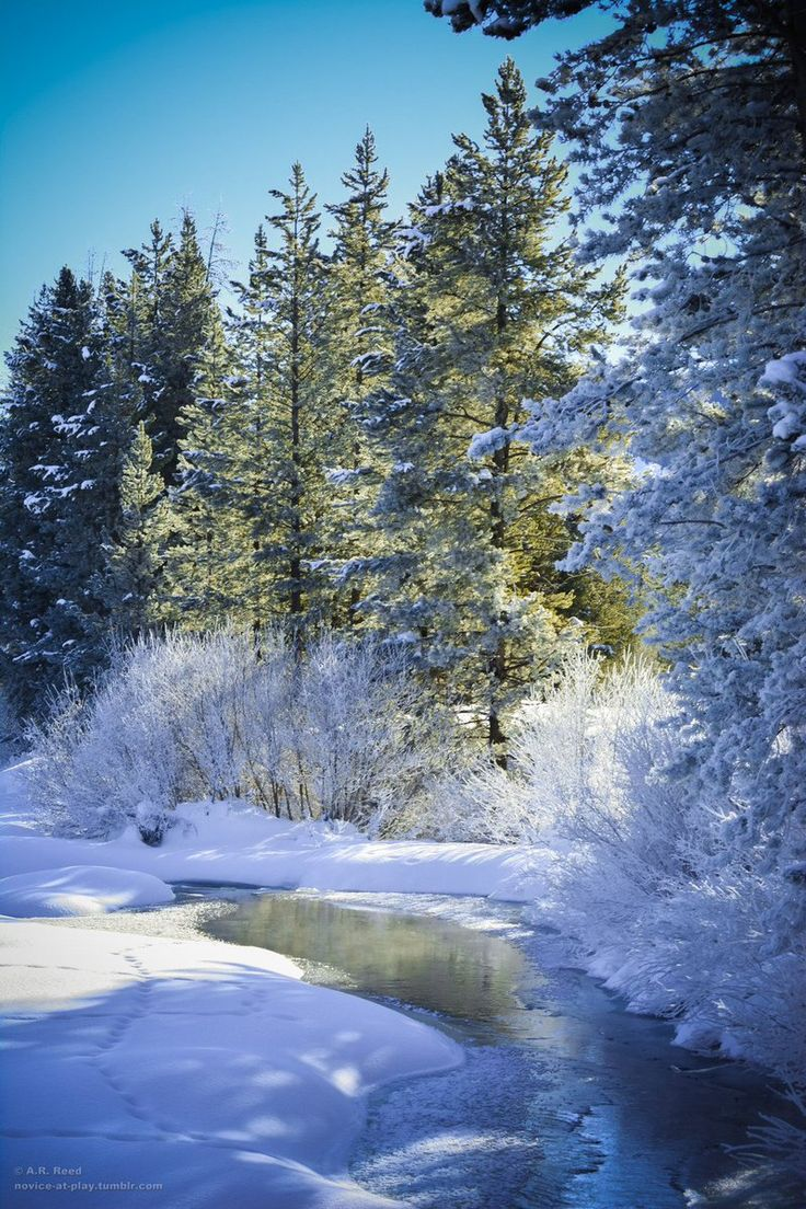 Зима радость фото обычно подают