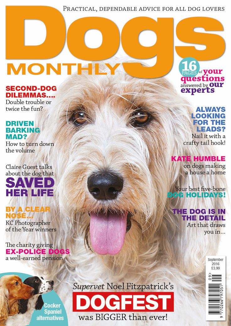 """A new service has opened its doors to dogs with Degenerative Myelopathy (DM) in the UK.The 'Finding a Cure for DM' foundation, a registered charity based in the US, has opened a UK branch of its """"Wheels to Help Me"""" programme to serve the UK and Europe. Degenerative Myelopathy is an incurable disease which affects the dog's spinal cord and mimics symptoms similar to MS and ALS in humans. Typical onset is six years and is seen most frequently in German Shepherd Dogs, Pembroke Welsh Corgis…"""