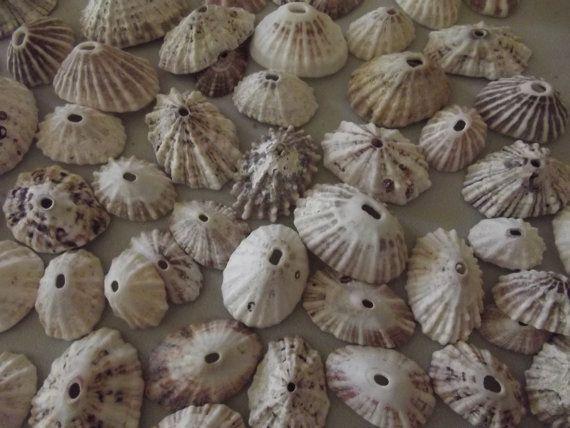 100 Sea Sanil / Art Supply/ Craft Shells  by DaisyAndMomSupply, $8.50