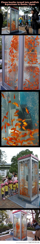 Aquarium phone booths…