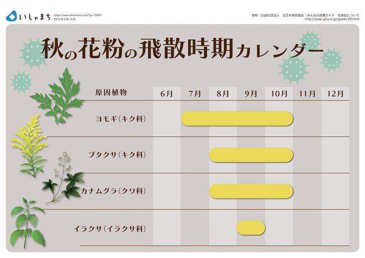 秋の花粉の飛散時期カレンダー  #infographics