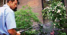 Curas para a ferrugem em folhas de plantas. A aparição de ferrugem nas folhas de plantas é um sinal de doença em seu jardim e plantas de casa. Embora essa doença seja caracterizada pelo o que parece a formação de ferrugem real, essas marcas são, na verdade, a colonização de fungos que crescem com o passar do tempo. Se essa infecção fúngica está fazendo uma ou mais de suas plantas refém, ...