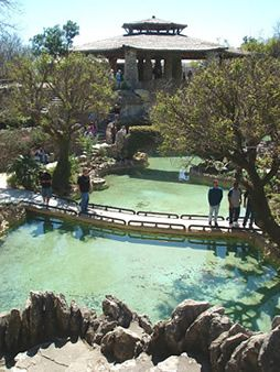 Location Japanese Tea Garden...San Antonio,TX...Good excursion idea for a sunny day...perfect for being artistic