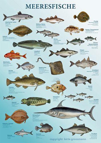 Plakat Meeresfische, Film & Fernsehen