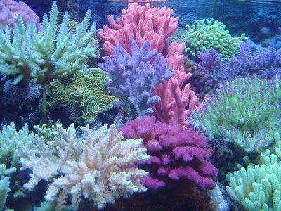 colours corals