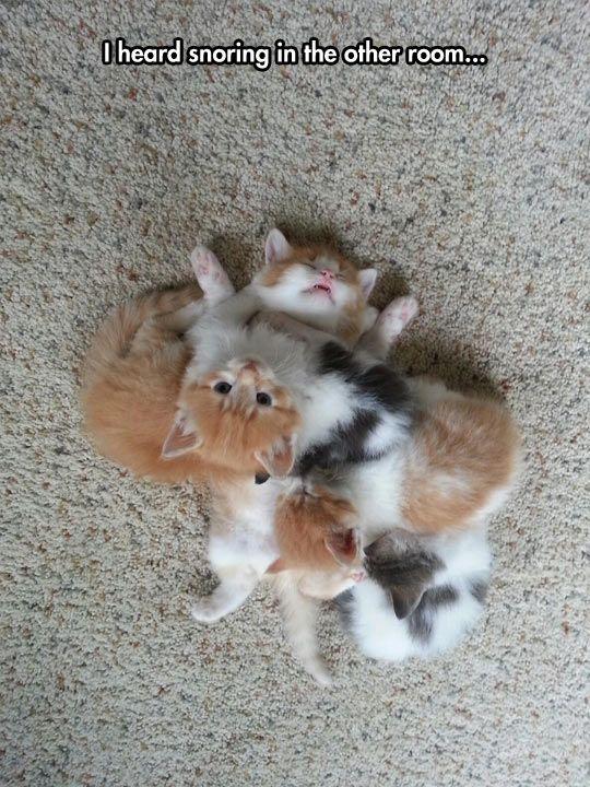 What A Sleepy Kitty