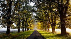 An Autumn Lane - Gostwyck, NSW