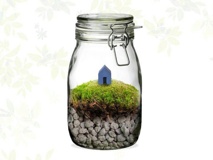 Mini moss