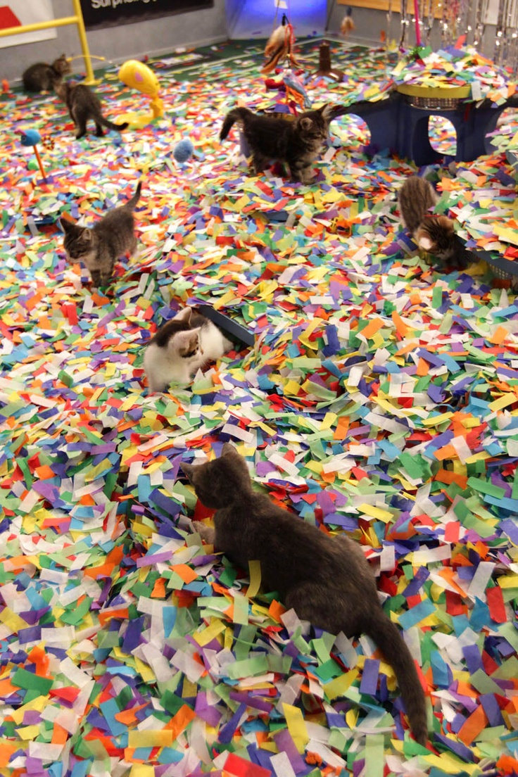 Behind the scenes of the Kitten Halftime Show (of the Puppy Bowl!)