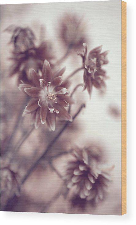Jenny Rainbow Fine Art Photography Wood Print featuring the photograph Eternal Flower Dreams by Jenny Rainbow