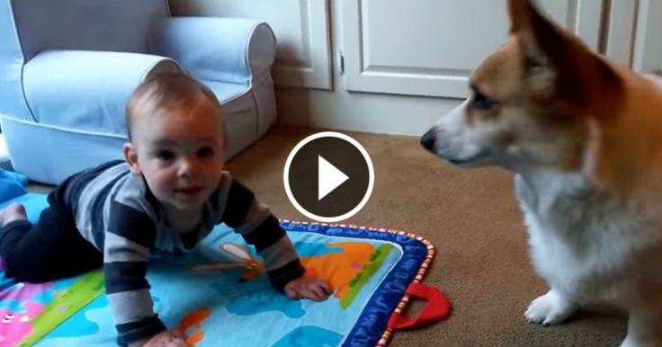 Rien de mieux qu'une jolie vidéo montrant la belle histoire d'amour entre un chien et un bébé pour se donner le sourire.