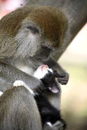 6. bello della mamma