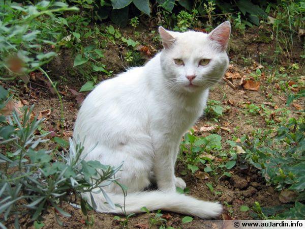 Les 46 meilleures images du tableau eloigner les chats sur pinterest animaux chats et cute - Eloigner les chats du jardin ...