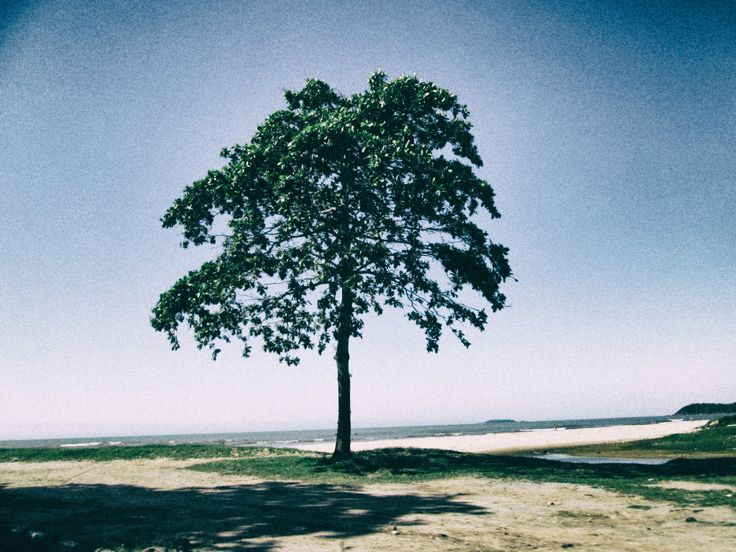 Old tree... Old beach... Old life...