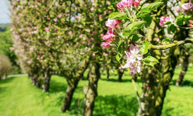 Hoy os presentamos cinco árboles frutales que puedes cultivar tanto en jardín como en maceta y que te proporcionarán una buena cosecha de fruta fresca durante el verano.