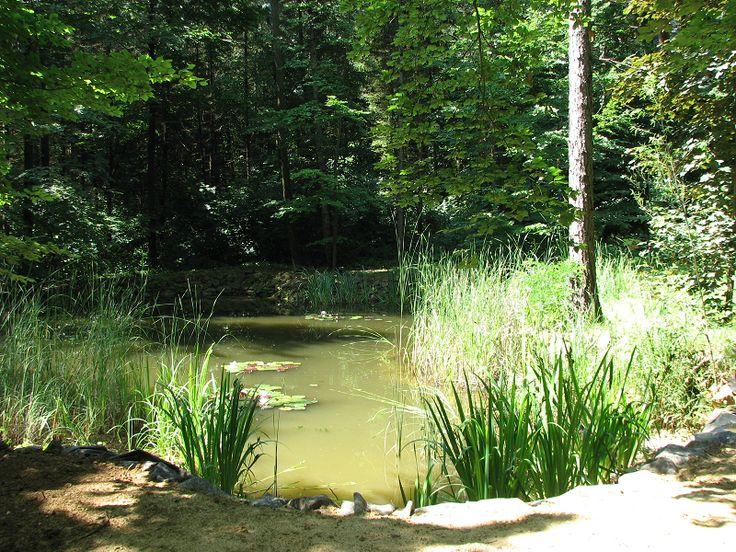 Budakeszi Erdészeti Arborétum (Budakeszi közelében 3.2 km) http://www.turabazis.hu/latnivalok_ismerteto_4686 #latnivalo #budakeszi #turabazis #hungary #magyarorszag #travel #tura #turista #kirandulas