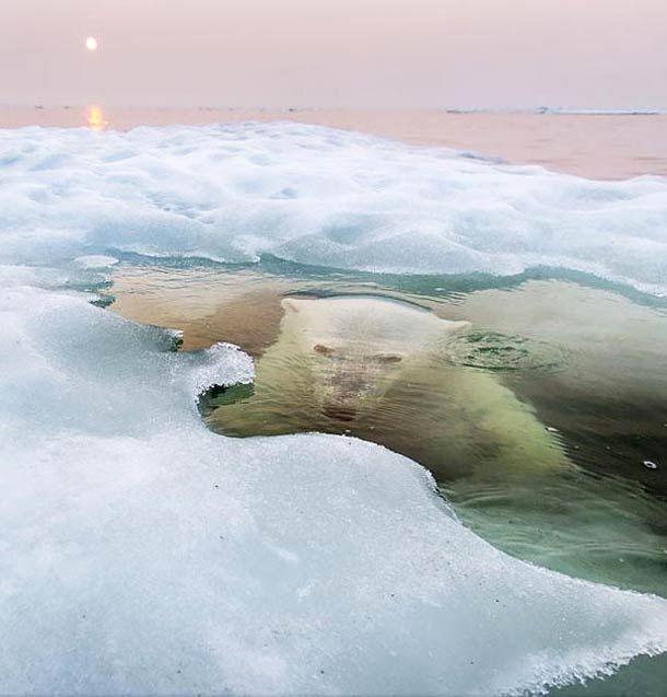 """Les photographies gagnantes du célèbre """"National Geographic Photo Contest 2013"""" viennent d'être annoncées parNational Geographic, avec cette année encore"""