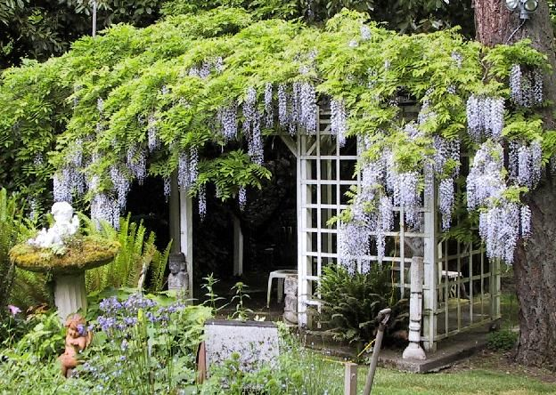 Love the smell of Wisteria!! Can't wait to plant some in our yard!: Flowers Gardens, Gardens Ideas, Secret Gardens, Outdoor Rooms, Arbors, Wisteria Pergolas, Hanging Flowers, Fairies House, Gardens Gazebo