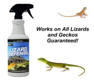 How to Get Rid of a Lizards in your home using repellents , granules , lizard blockers and ultra sonic devices which can only be heard by the lizards