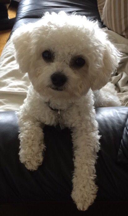 Beautiful Milo
