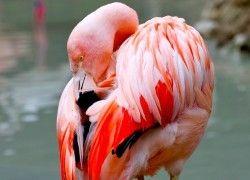 Centro Tutela Specie Minacciate   Parco Natura Viva