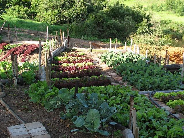 464 best Cottage Potager images on Pinterest Gardening