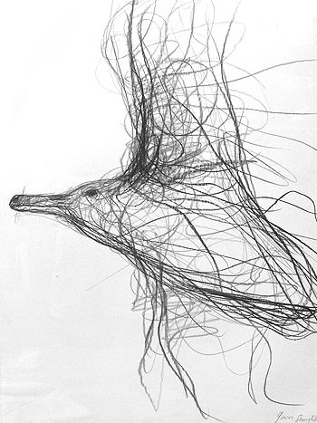 Herring Gull on the Turn  Graphite on 300gm acid free paper. Jason Gathorne-Hardy