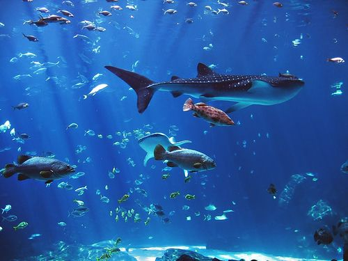 68 best images about at georgia aquarium on pinterest for Georgia freshwater fish