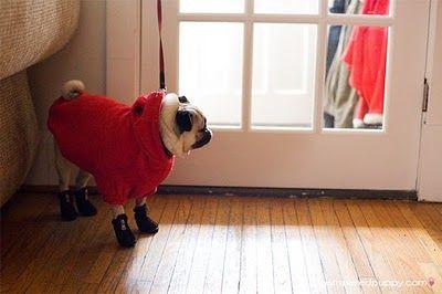 Chubasqueros para perros  www.perronality.com