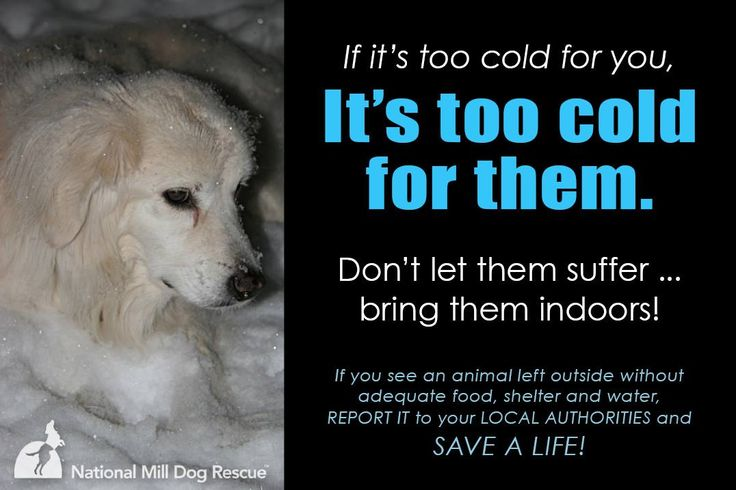 Record cold temperatures are sweeping large parts of the country, and many animals will suffer as a result. It is a crime - and a felony in some areas - to leave a pet outdoors in extreme weather. Please remember to bring your pets indoors, and if you see an animal left out in the cold, find out what you can do here: http://www.humanesociety.org/news/press_releases/2010/12/keep_pets_inside_winter_122110.html.