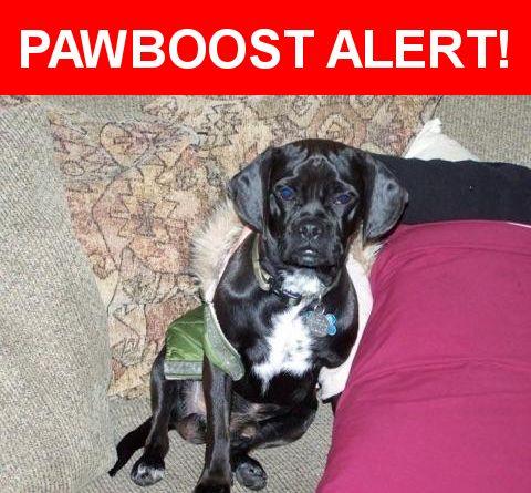 Please spread the word! Harley was last seen in Huntington Beach, CA 92648.