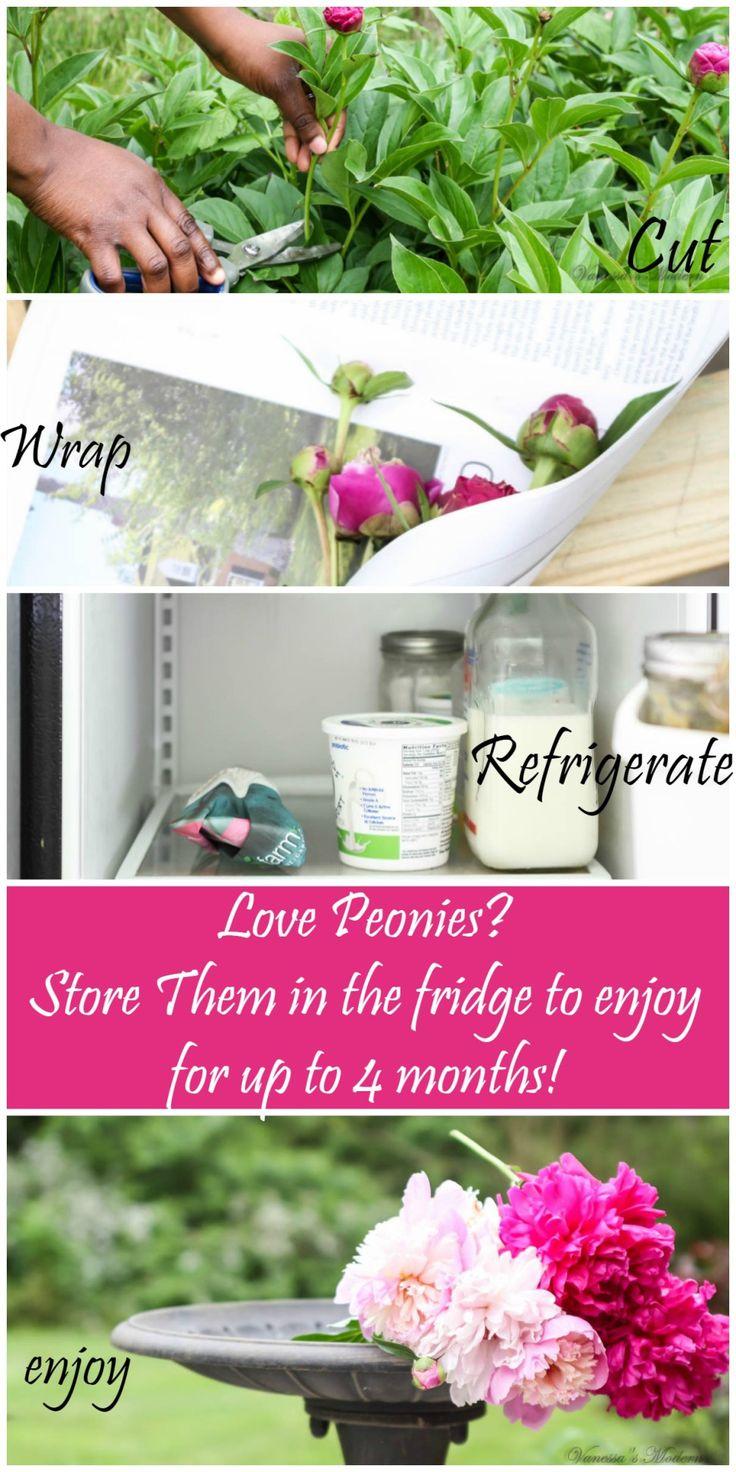 How to preserve peonies. Make peonies last longer.