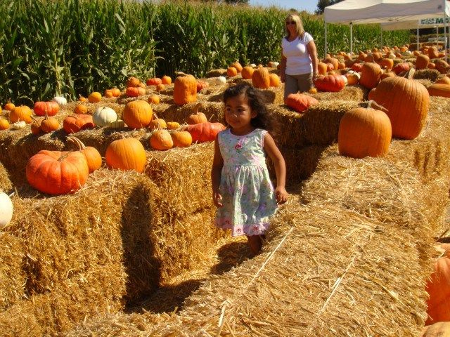 Take Your Pick: 16 Pumpkin Patches Worthy of Repeat Visits