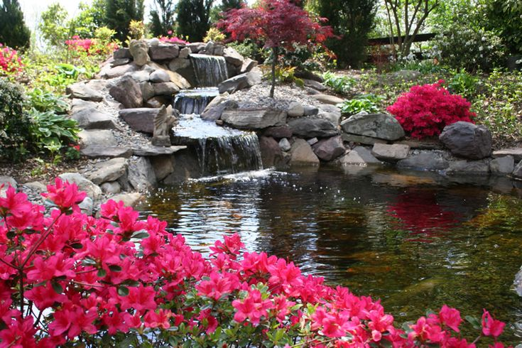 Natural landscaping around koi ponds landscape plantings for Natural koi pond