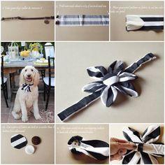 DIY Adorable Special Event Blumenkragen für Ihren Hund   – Speedy Stuff – #Ador… – SELBERMACHEN