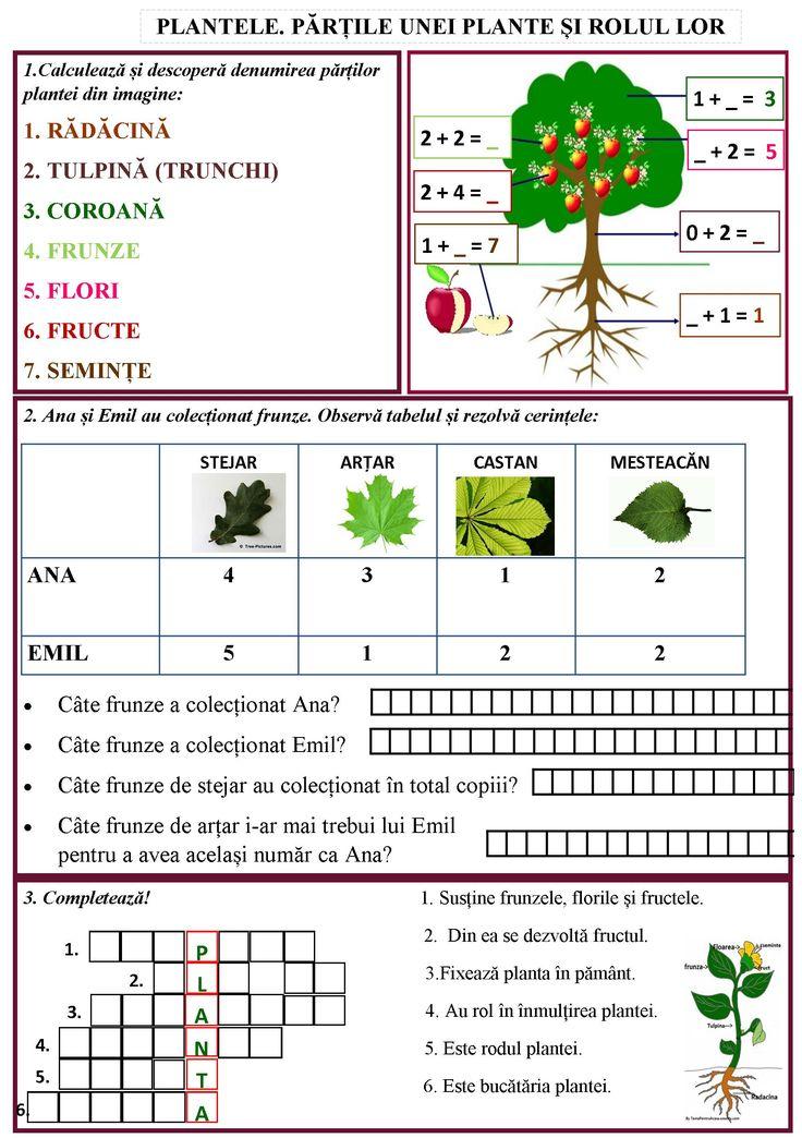 Plantele. Părțile unei plante și rolul lor