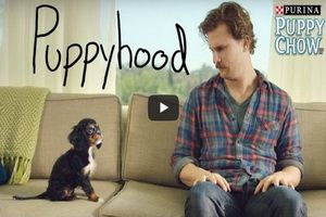 "In ""Puppyhood,"" a video for Purina Puppy Chow produced with BuzzFeed, a guy spontaneously adopts a puppy, they bond in typical roommate fashion...and a marketer's dream comes true. A viral video is every marketer's dream. It's the surest way to cut through the noise of the internet. And studies show that social viewers—people who watch shared content rather than videos they've found by browsing—are far more likely to buy a product and recommend it to others."
