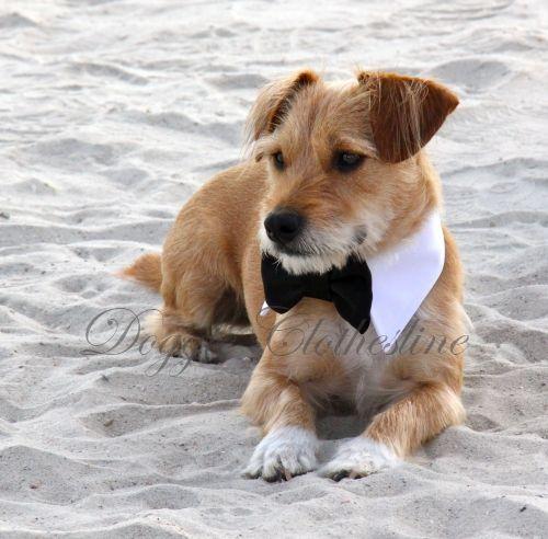 Wedding dog- Find dog wedding attire at http://www.doggieclothesline.com/wedding