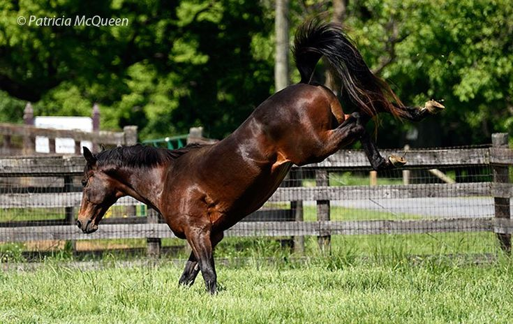 Children of Secretariat: the old charmer still kicking up his heels at 28 | Topics: Old Friends, Secretariat, Innkeeper | Thoroughbred Racing Commentary