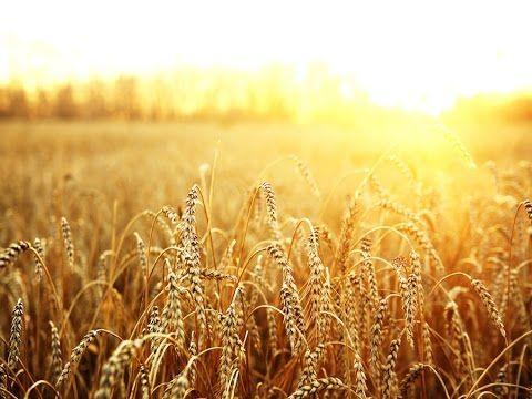 WASDE Report: Esplodono Soybeans e Corn