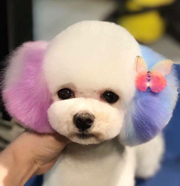 Pastel hue pup