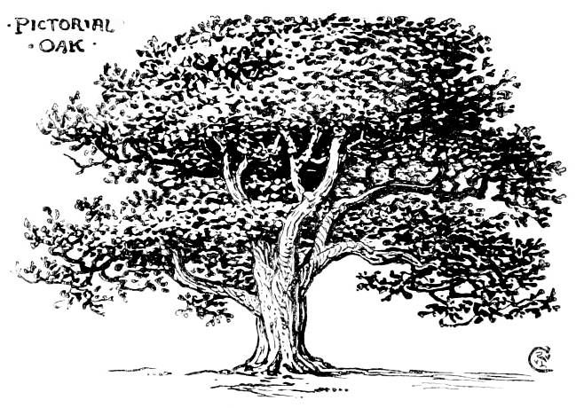 Line drawing oak tree images for Best tree drawing